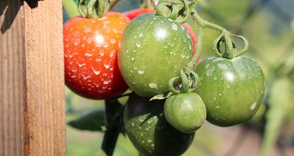 tipos-de-productos-fitosanitarios